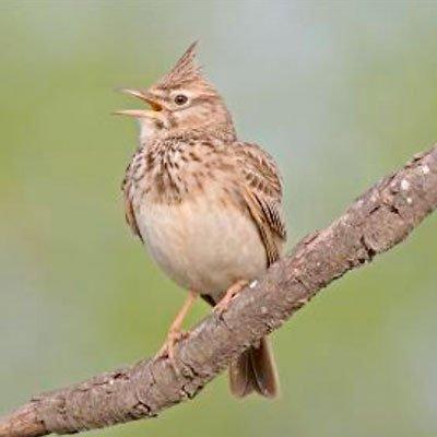 Vogelstimmenwanderung am 27.05.2018
