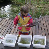 Leben im Teich