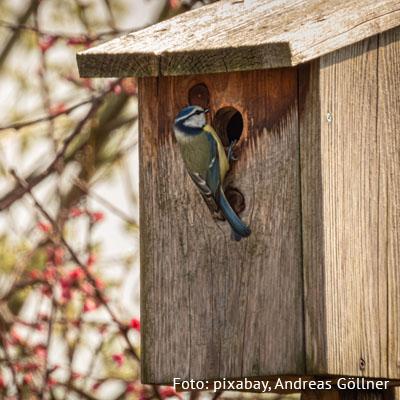 Wir bauen Nistkästen für Vögel am 11. September 2020